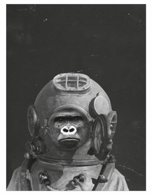 timhenning-gorilla-I-30x40cm