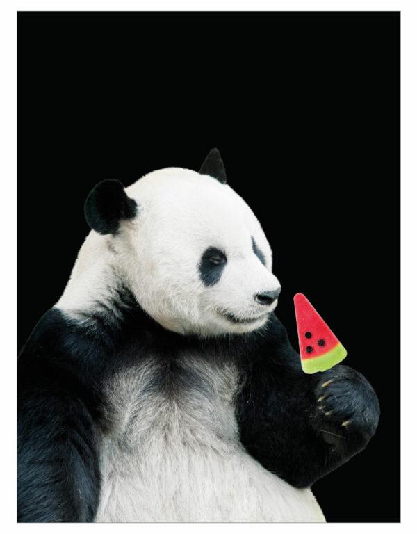 timhenning-panda-30x40cm
