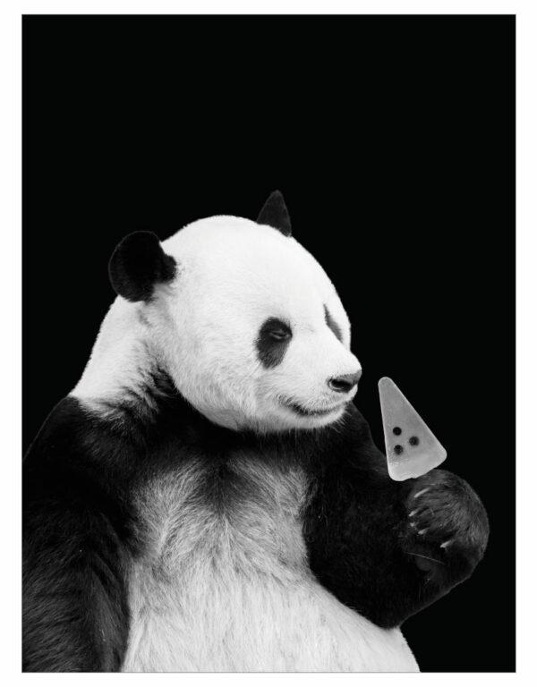 timhenning-panda-bw-30x40cm